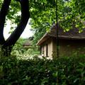 Photos: 日本の夏-01581