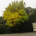 鎌倉 (27)