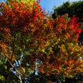 写真: 鎌倉2-23
