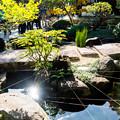 写真: 鎌倉2-31