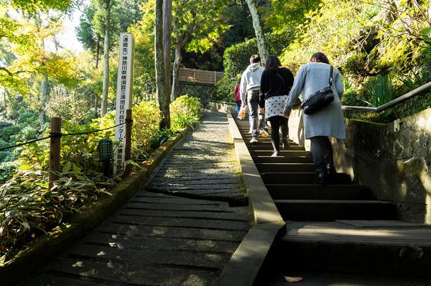 写真: 鎌倉2-32