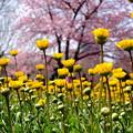 空に向かって咲く花3