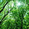 森林を歩く1