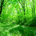 森林を歩く2