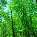 森林を歩く3