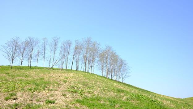 枯れ木と丘
