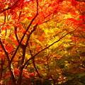 写真: 秋の模様