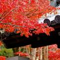京都 南禅寺水路閣 紅葉