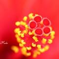 写真: 赤に黄色