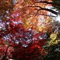 写真: 魚眼で紅葉