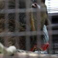 写真: 東山動植物園15