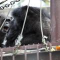 写真: 東山動植物園17