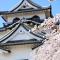 彦根城桜5Ds5