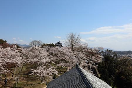 彦根城桜5Ds7