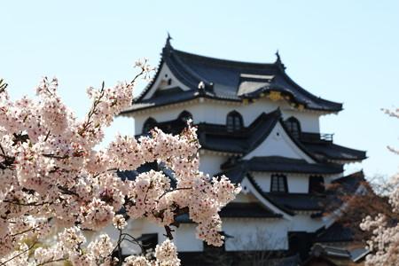 彦根城桜5Ds13