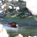 彦根城桜5Ds16