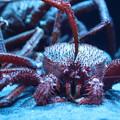 深海魚水族館21