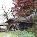 羊山公園6