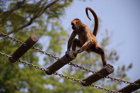 浜松市動物園3