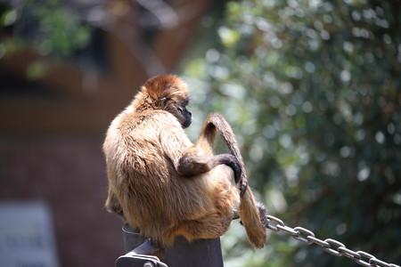 浜松市動物園9