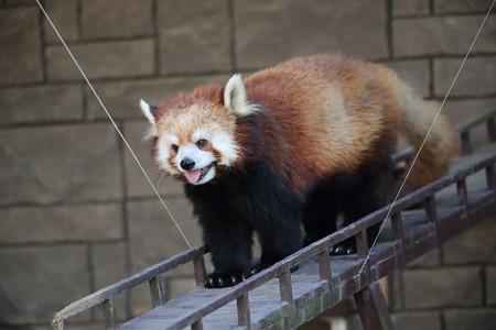 浜松市動物園48
