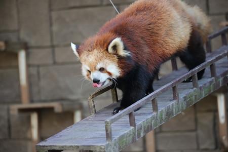 浜松市動物園49