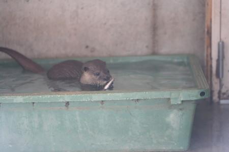 浜松市動物園51