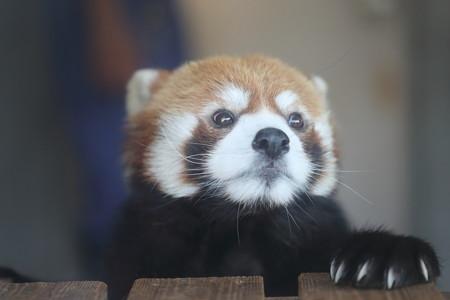 浜松市動物園53