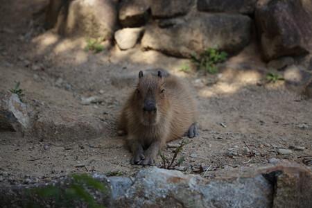 浜松市動物園63