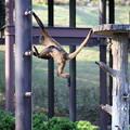 浜松市動物園74