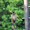 浜松市動物園76