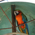 浜松市動物園80
