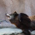 浜松市動物園87