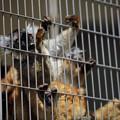 浜松市動物園90