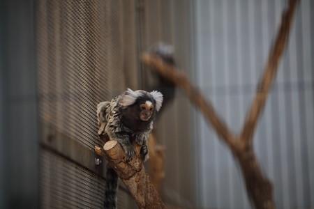 浜松市動物園93
