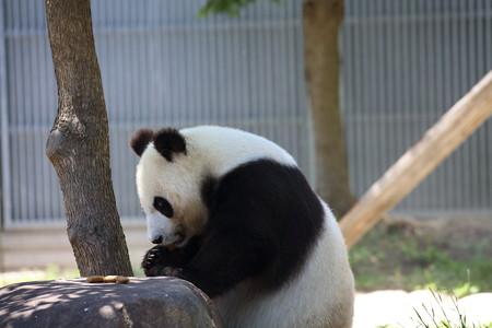 神戸市王子動物園6
