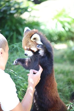 神戸市王子動物園28