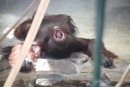 神戸市王子動物園39