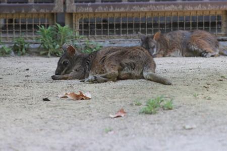 神戸市王子動物園122