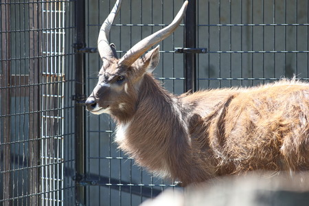 神戸市王子動物園121