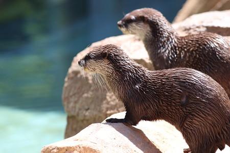 神戸市王子動物園104