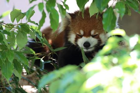 神戸市王子動物園99