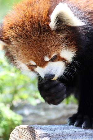神戸市王子動物園93