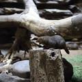 Photos: 上野動物園83