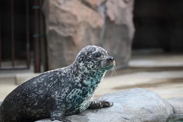 Photos: 上野動物園92