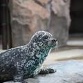 写真: 上野動物園92
