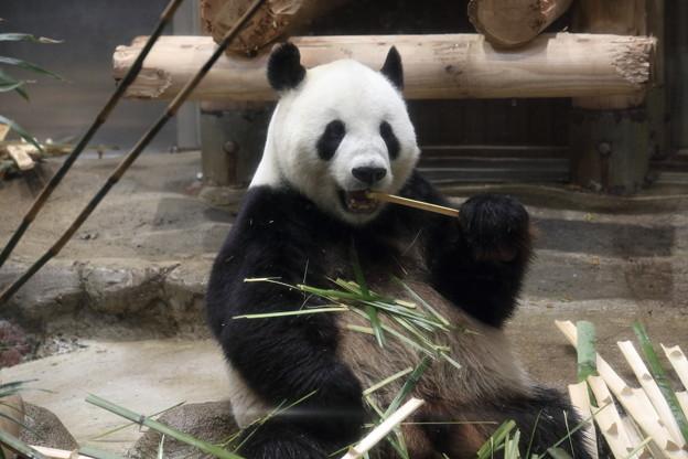上野動物園95