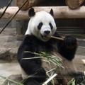 写真: 上野動物園95
