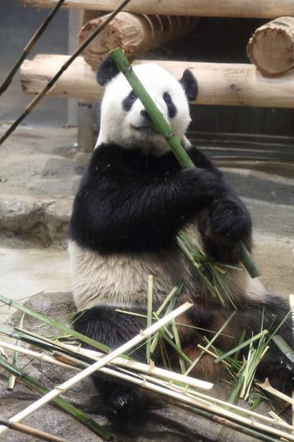 写真: 上野動物園96