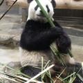 上野動物園96